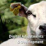 Digital Adjustments & Development in Photography